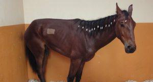 egs-horse